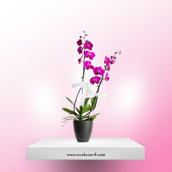 2-Dal-Mor-Orkide